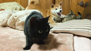 うるせぇやつら☆ The cat hates noisy guys
